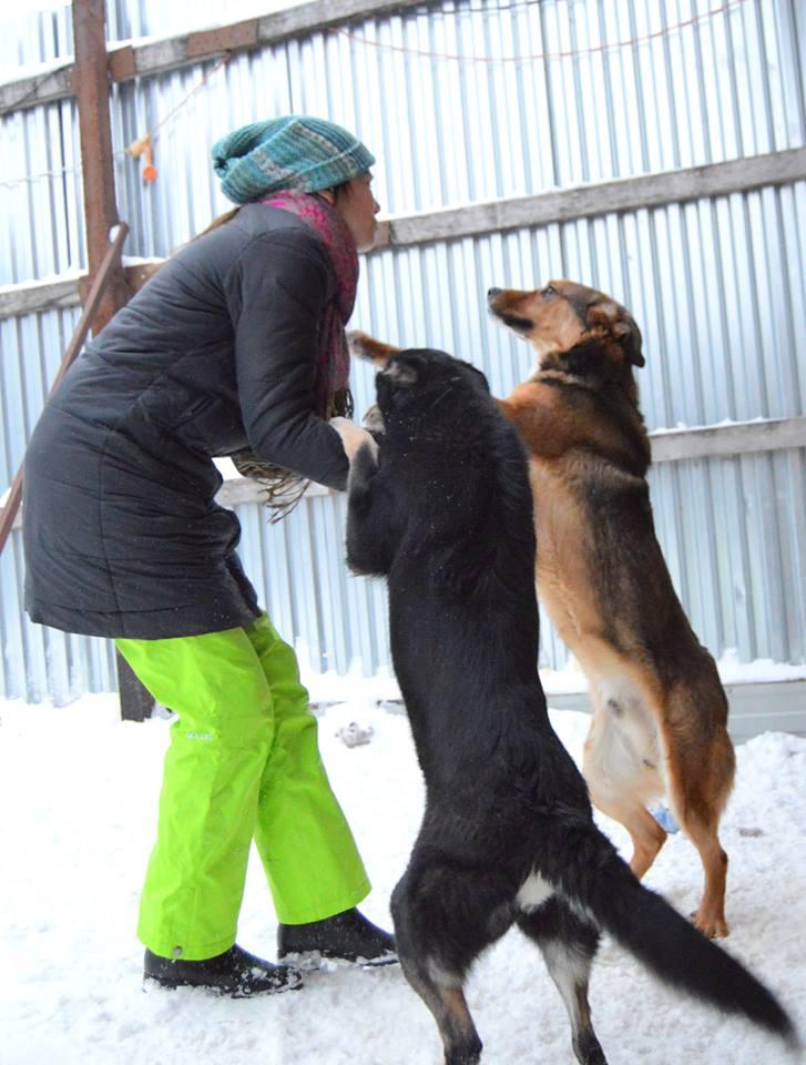 Кайзер собака из догпорта