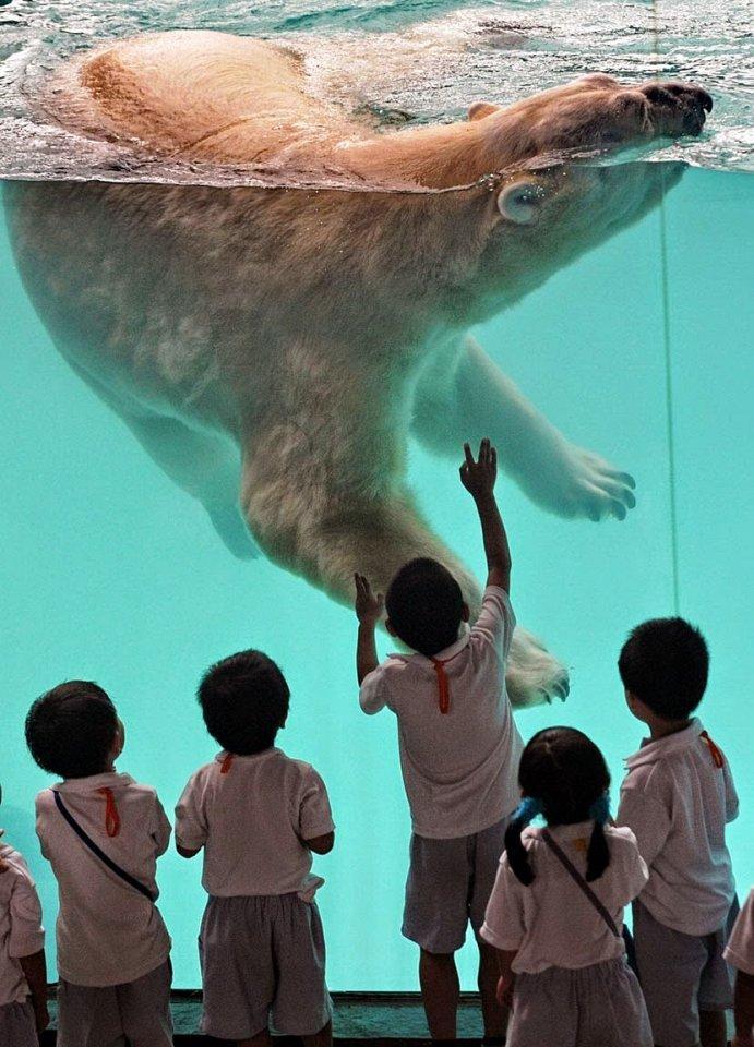 4. Сингапурский зоопарк На 28 гектарах сингапурского зоопарка произрастает множество экзотических де