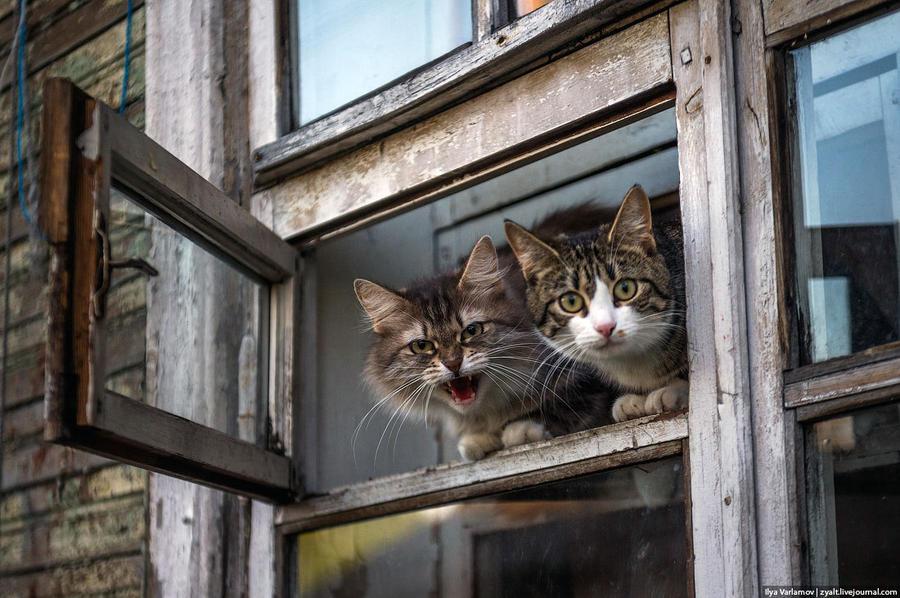 4. Коты, в отличие от крыс, прыгать по воде не хотят и только шипят, сидя в окнах.