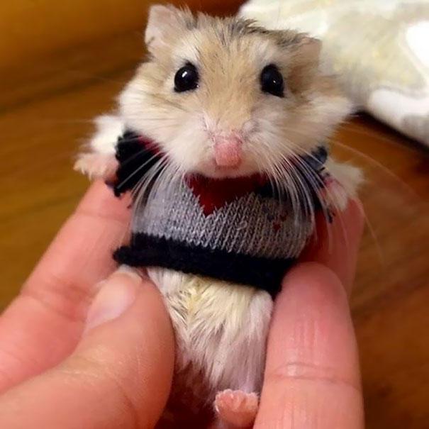 Эти милые животные в свитерах согреют вас