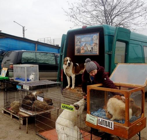 ВВолгограде устранили два блошиных рынка вВорошиловском иКраснооктябрьском районах