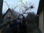 плавненькое опускание дерева