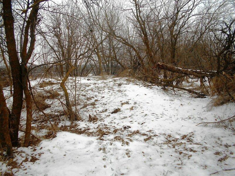 Лесок, зима ... DSCN1118.JPG