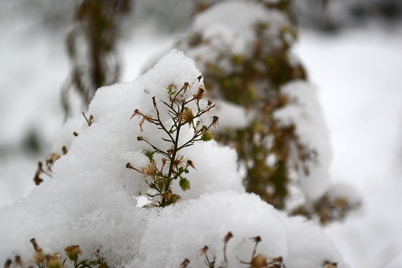 цветы в снегу 26.jpg