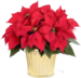 red-poinsettia.png