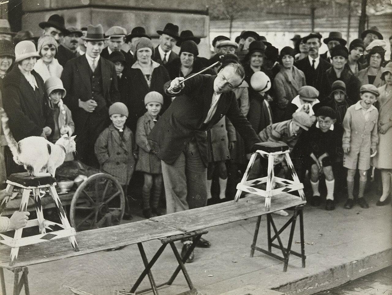 1930. Уличное выступление цирка кошек