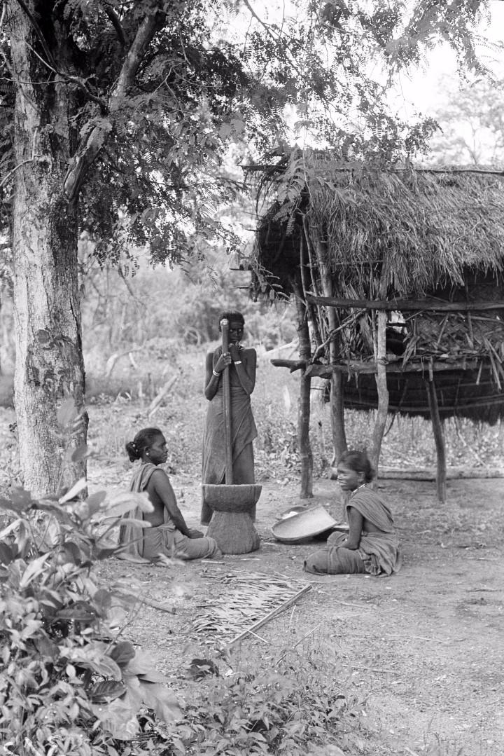 309. Калкуда. Молодая женщина из прибрежных веддов толчет кукурузу
