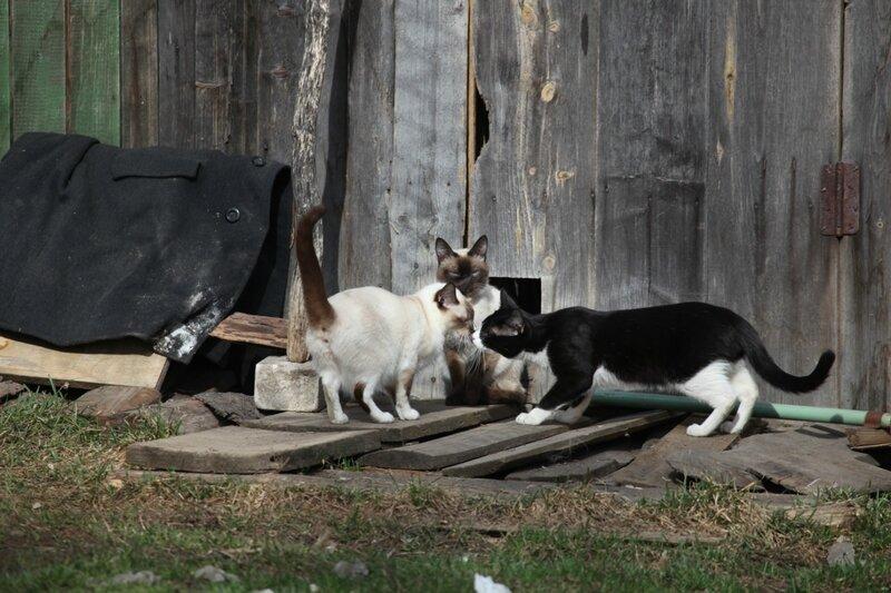 Тверская область, город Кашин, коты