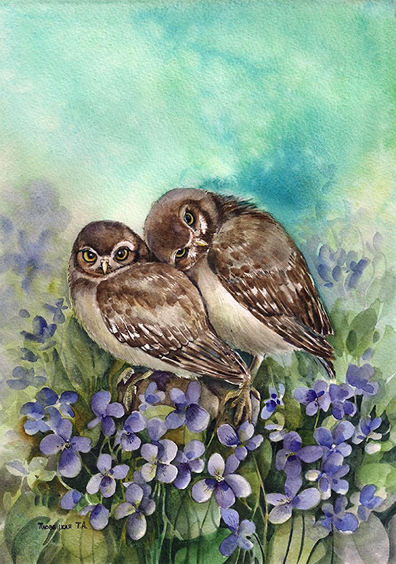 Картинки по запросу живая сова с очумелыми глазками