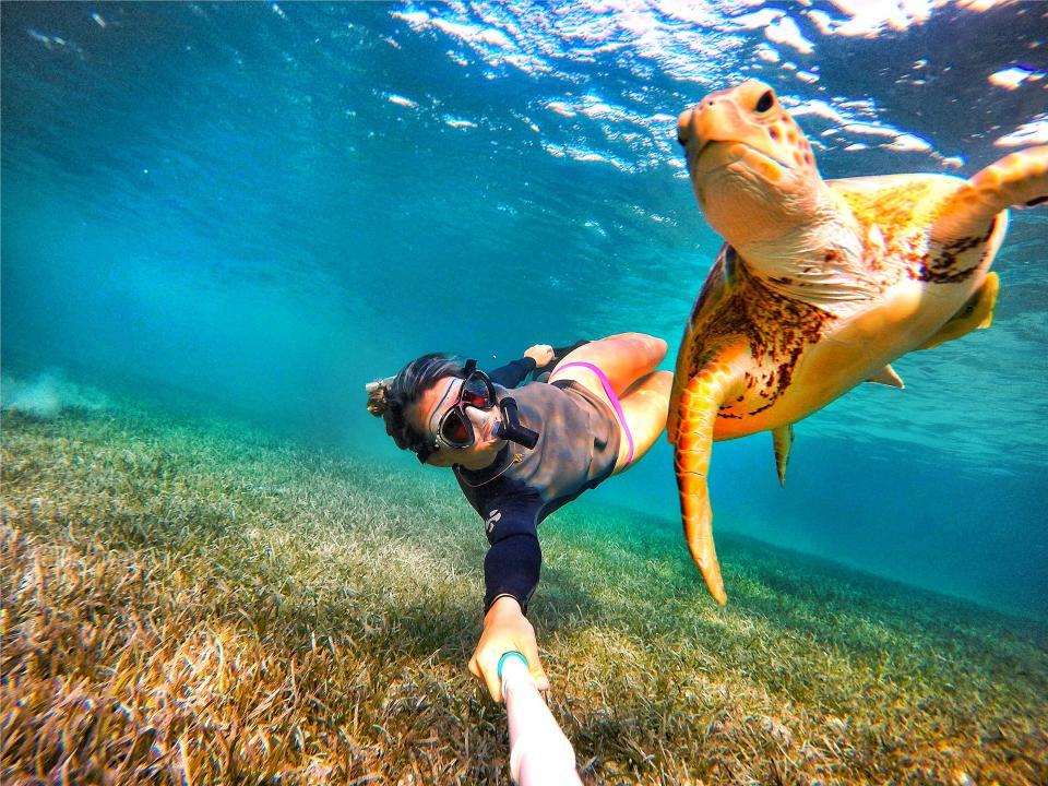 Студентка избавилась от депрессии, общаясь с акулами, скатами и свиньями на Багамах