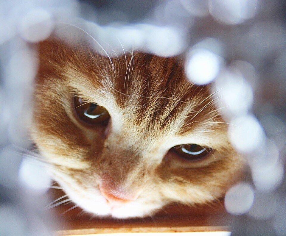 кошки-10.jpg
