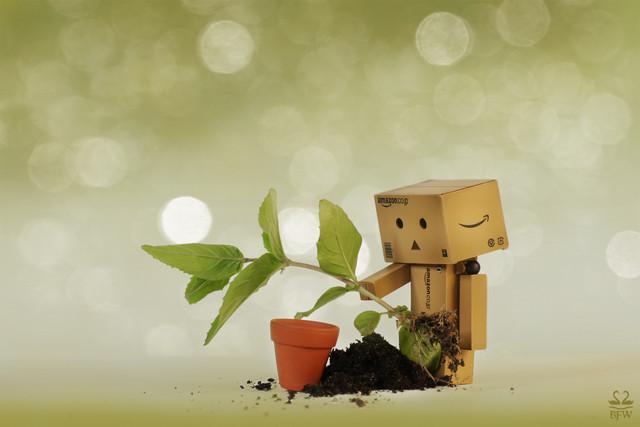 14 мая День посадки леса. Мир должен быть зеленым