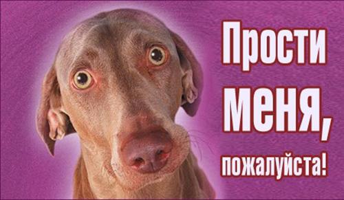 Прости меня, пожалуйста! Пес с круглыми глазами открытки фото рисунки картинки поздравления
