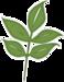 mhtdesigns_schooliscool_leaf1.png