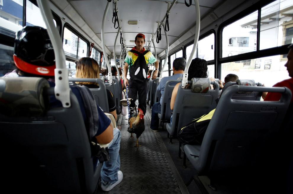 7. Разговор на повышенных тонах с наглыми водителями. (Фото Juan Carlos Ulate | Reuters):
