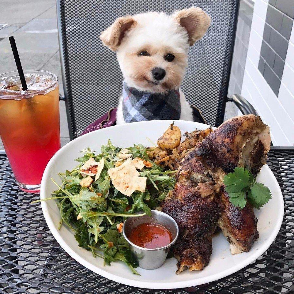 «Пёс-гурман» Папай