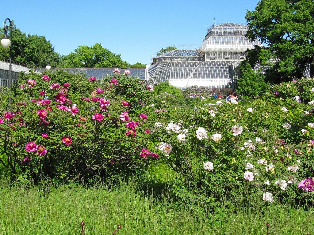 фото ботанического сада на алтуфьевском шоссе отметить