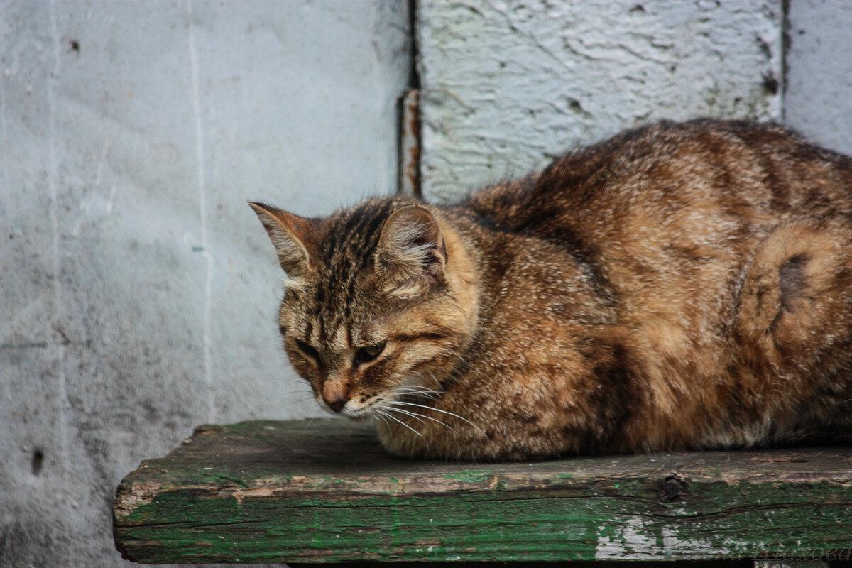Котики-3.jpg