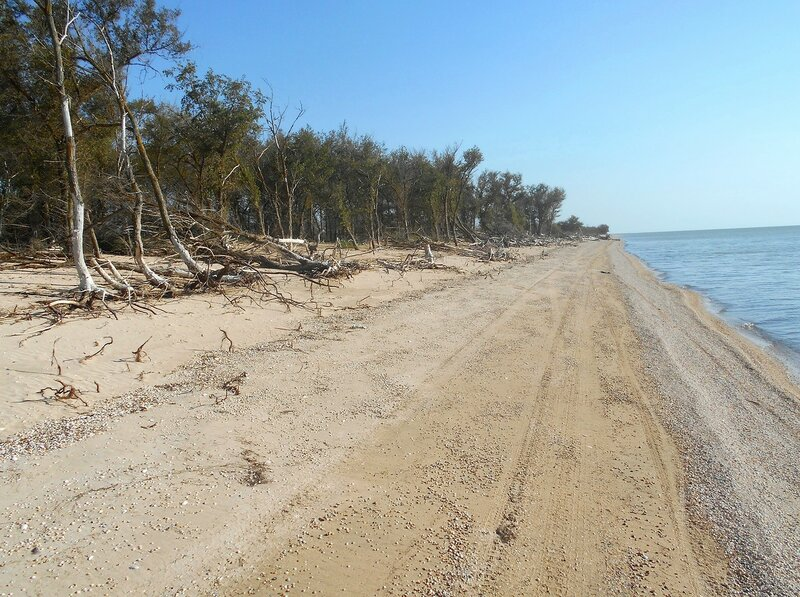 Лес у моря ... DSCN4361.JPG