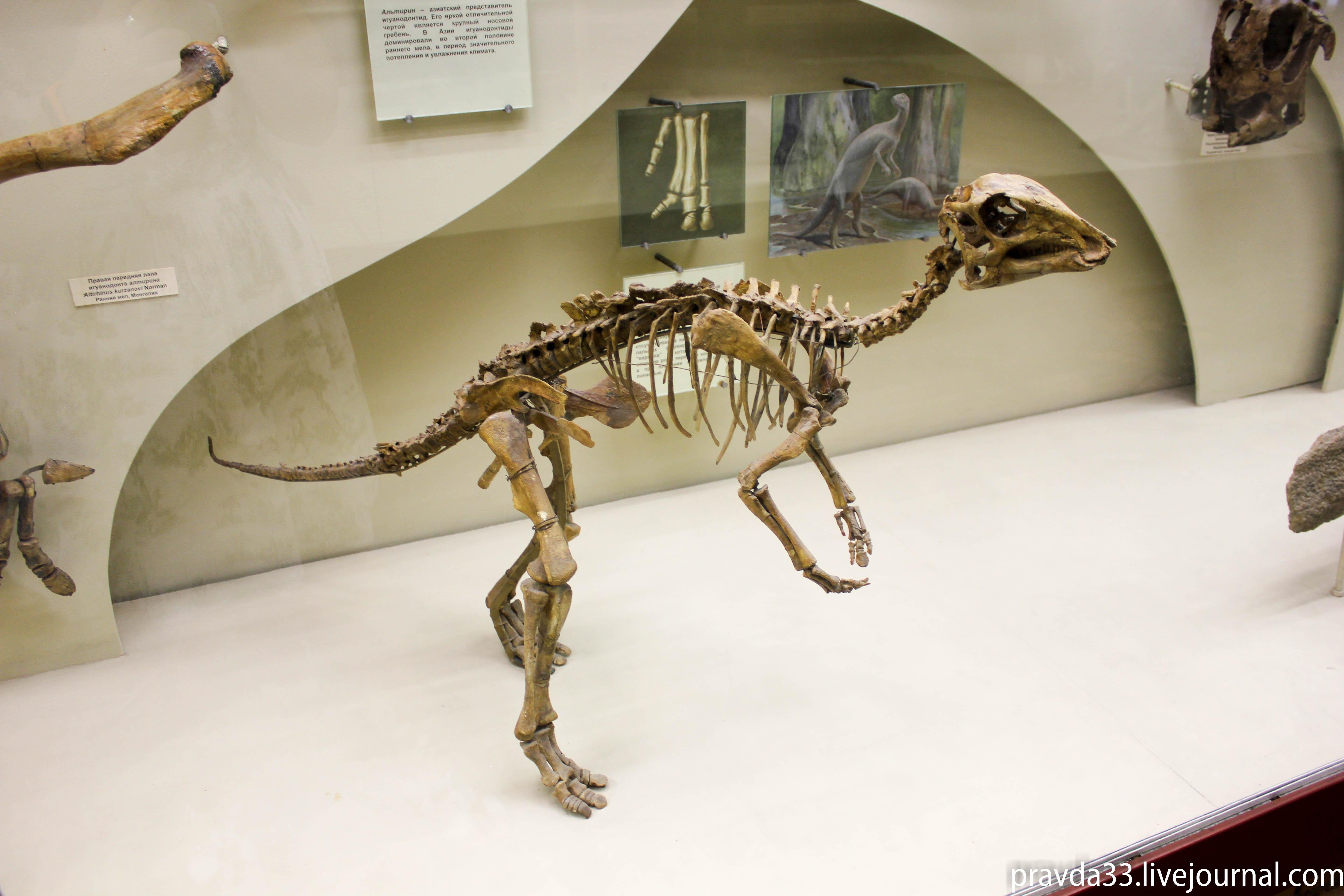 Музей палеонтологии-54.jpg