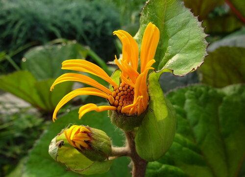 ...как раскрывается цветок?...
