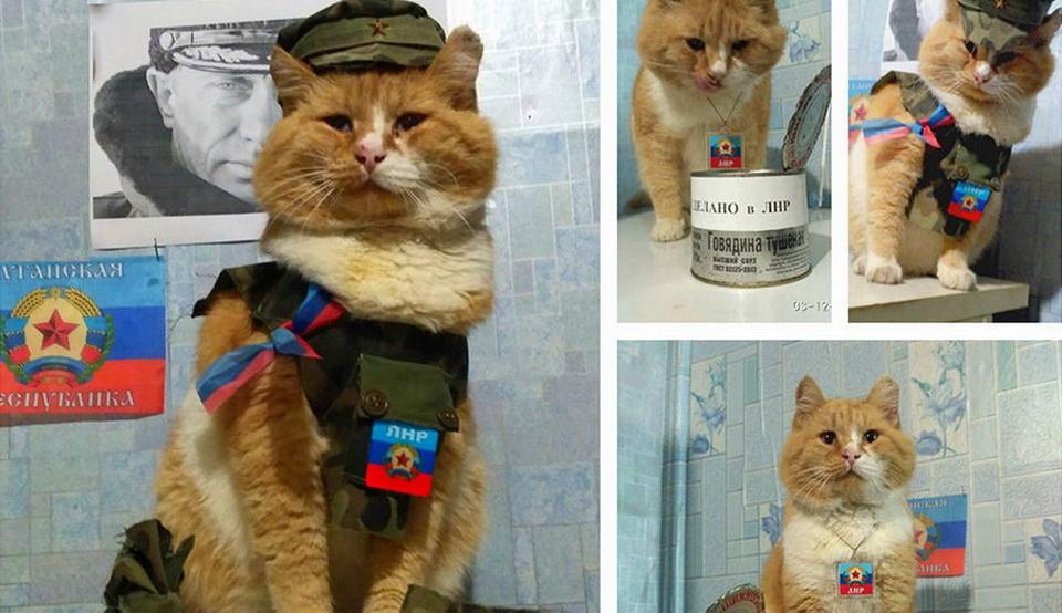 коты ЛНР