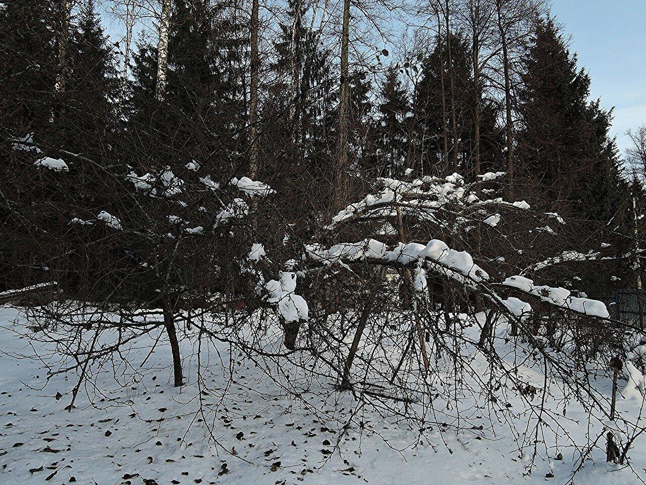 Последствия ледяного дождя