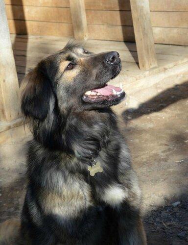 Масяня собака из приюта москва