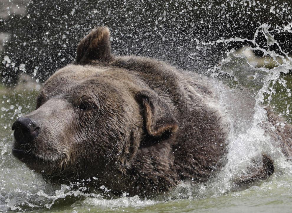 «У медведей, в отличие от людей, нет притворства», — говорит Джим.