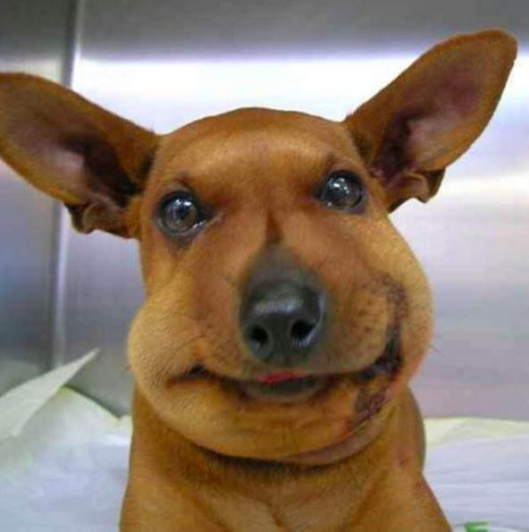 Эта собака еще не видела себя в зеркало.