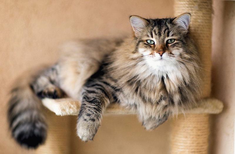 Рассказы владельцев домашних кошек о том, как после общения со своей любимицей, у них исчезали г