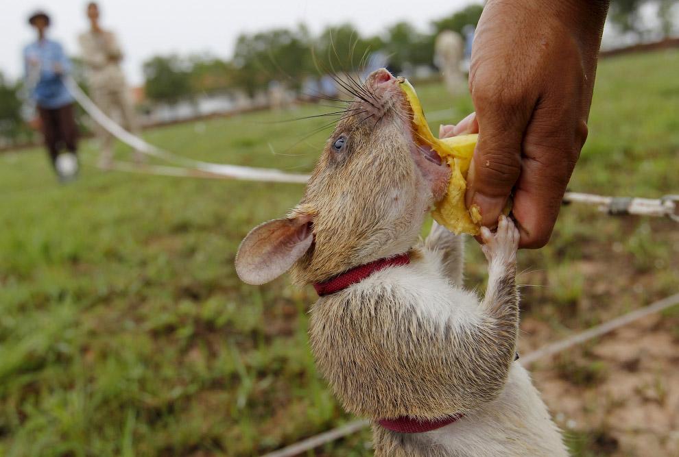 8. Следующий! (Фото Samrang Pring | Reuters):