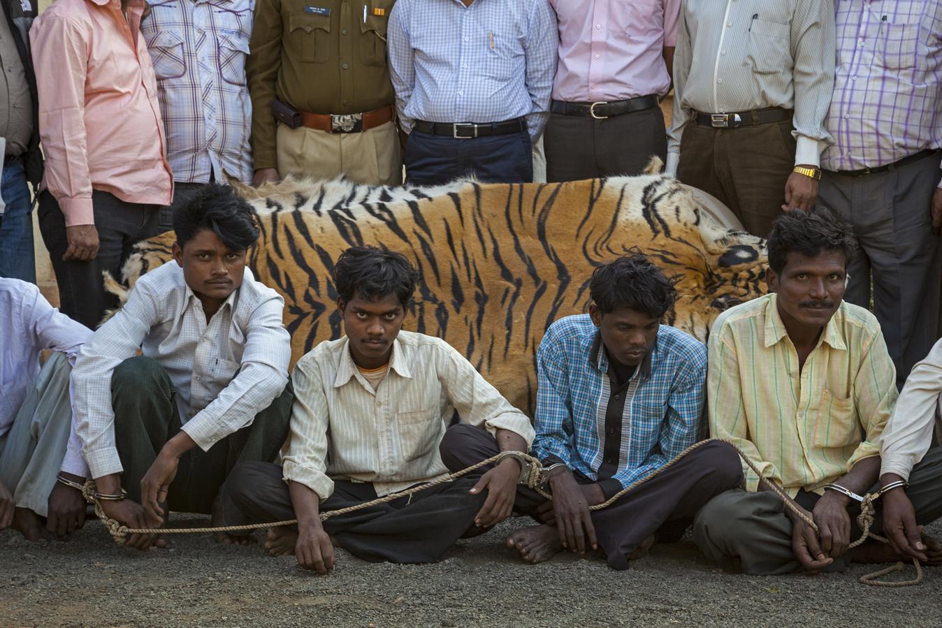 Несколько лет назад власти штата Ассам легализировали убийство людей, охотящихся на тигров и носорог