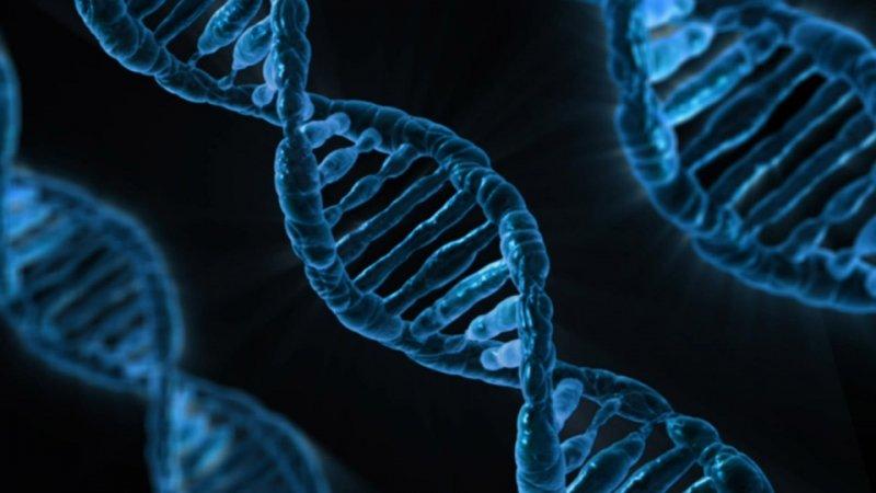 Академия медицины США позволила корректировать геном человека