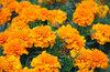 Садовые цветы. Дача