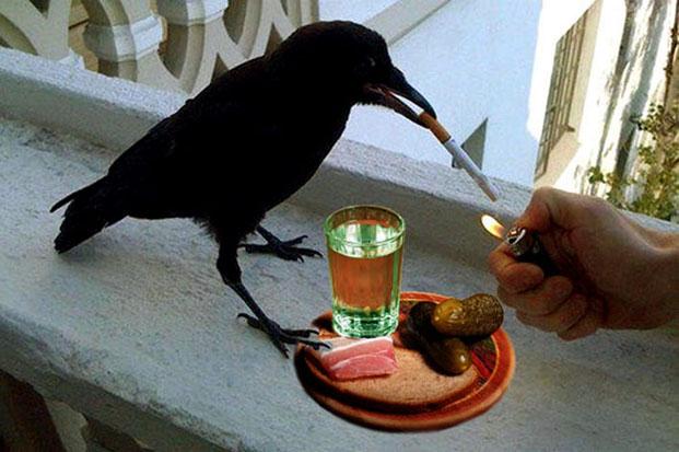 Ворона   с сигаретой и водкой.jpg