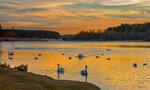 Лебединное озеро