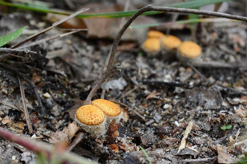 грибной мир 16 бокальчики.jpg