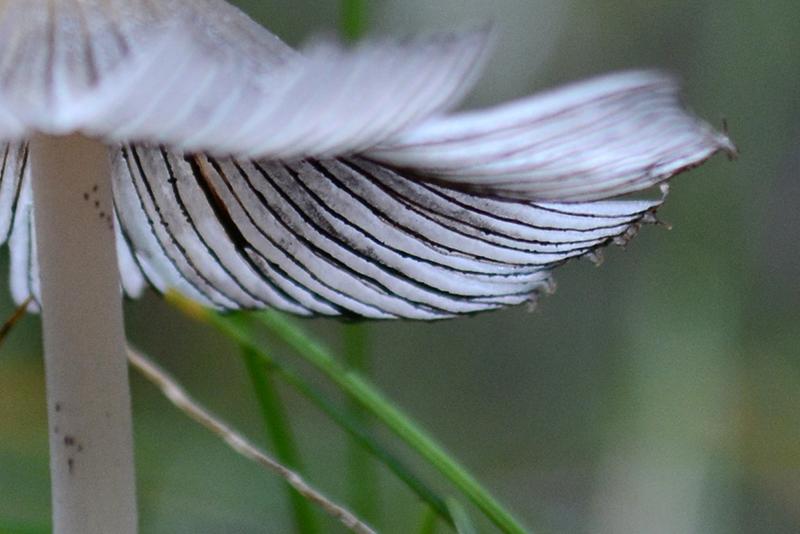 грибной мир 16 7.jpg
