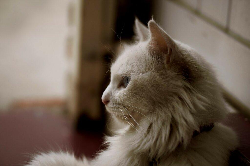 кошки-кошки-бел.jpg