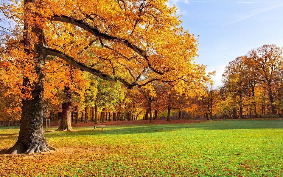 Рабочий стол обои осень