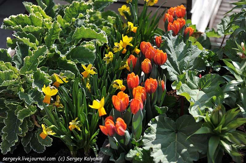Inspirational Garden 2 (3).JPG