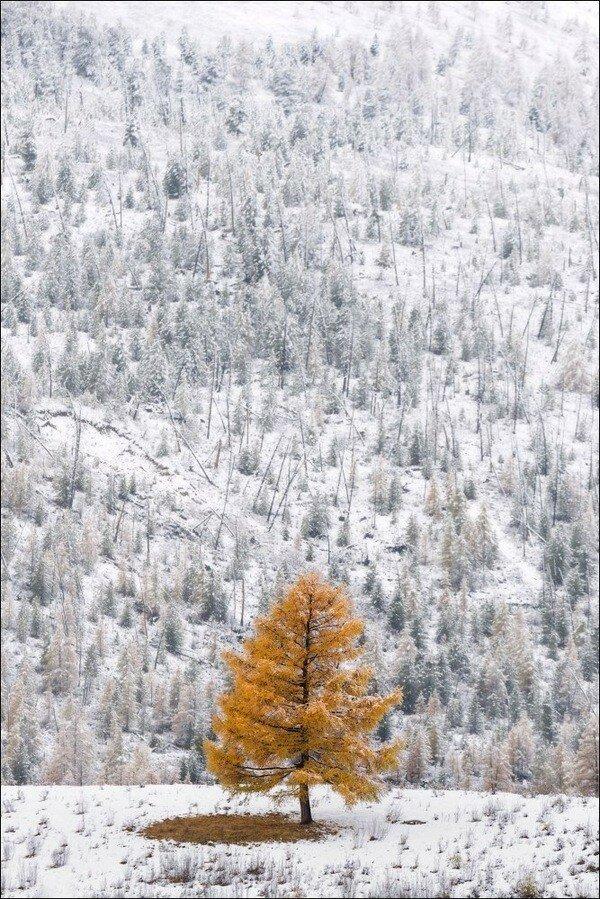 Алтай, Чибитское ущелье