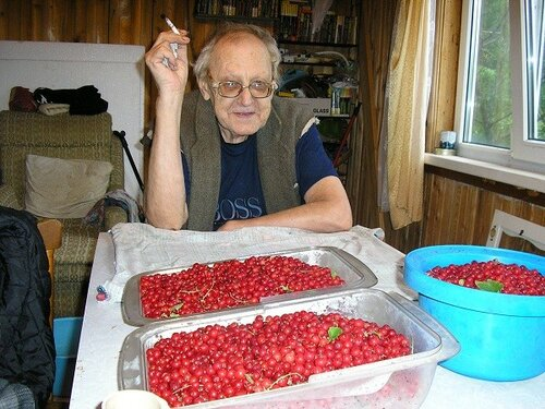 P1010376 Урожай красной смородины. 2015 год.jpg
