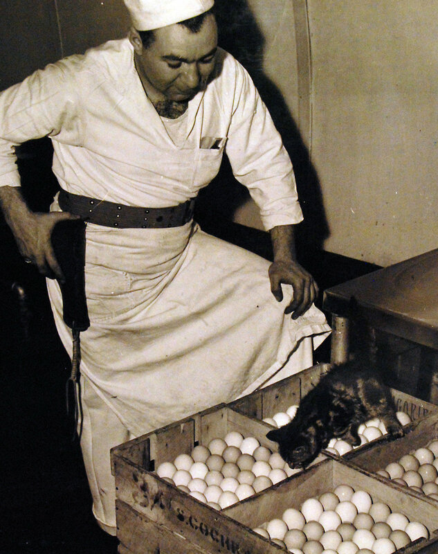 The Mascot (kitten) of Springtown Camp, U.S. Naval Operating Base, Londonderry, Ireland, examines a crate of newly arrived eggs. S2/C I.D. Marcus keeps an eye on the kitten and the eggs. June 29 1943.
