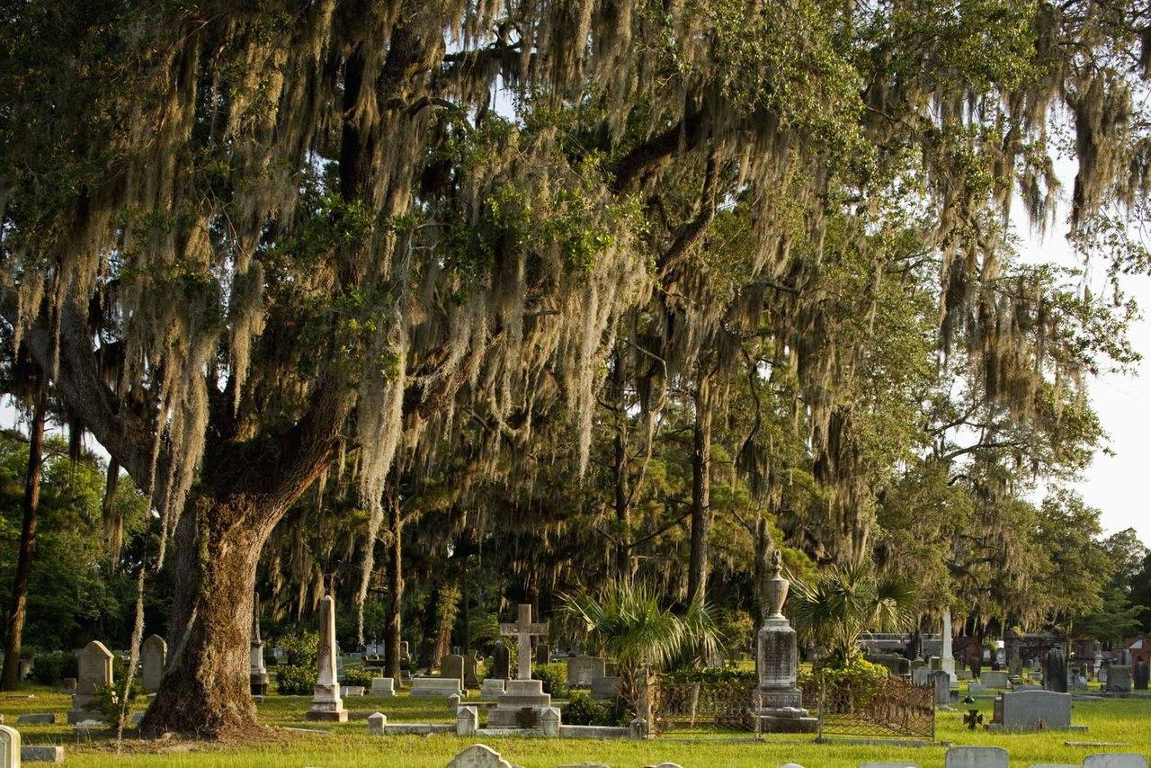Кладбище Бонавентура с его замшелыми ангелами и узловатыми дубами — идеальный образец южной готики.