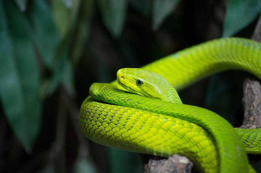 Самые удивительные и красивые змеи планеты