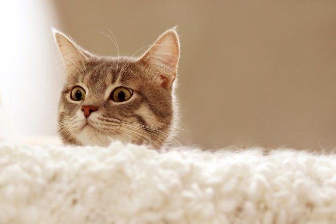 Еще котам нравится ловить всяких мелких грызунов, наводящих ужас на домохозяек. Даже если в твоей кв