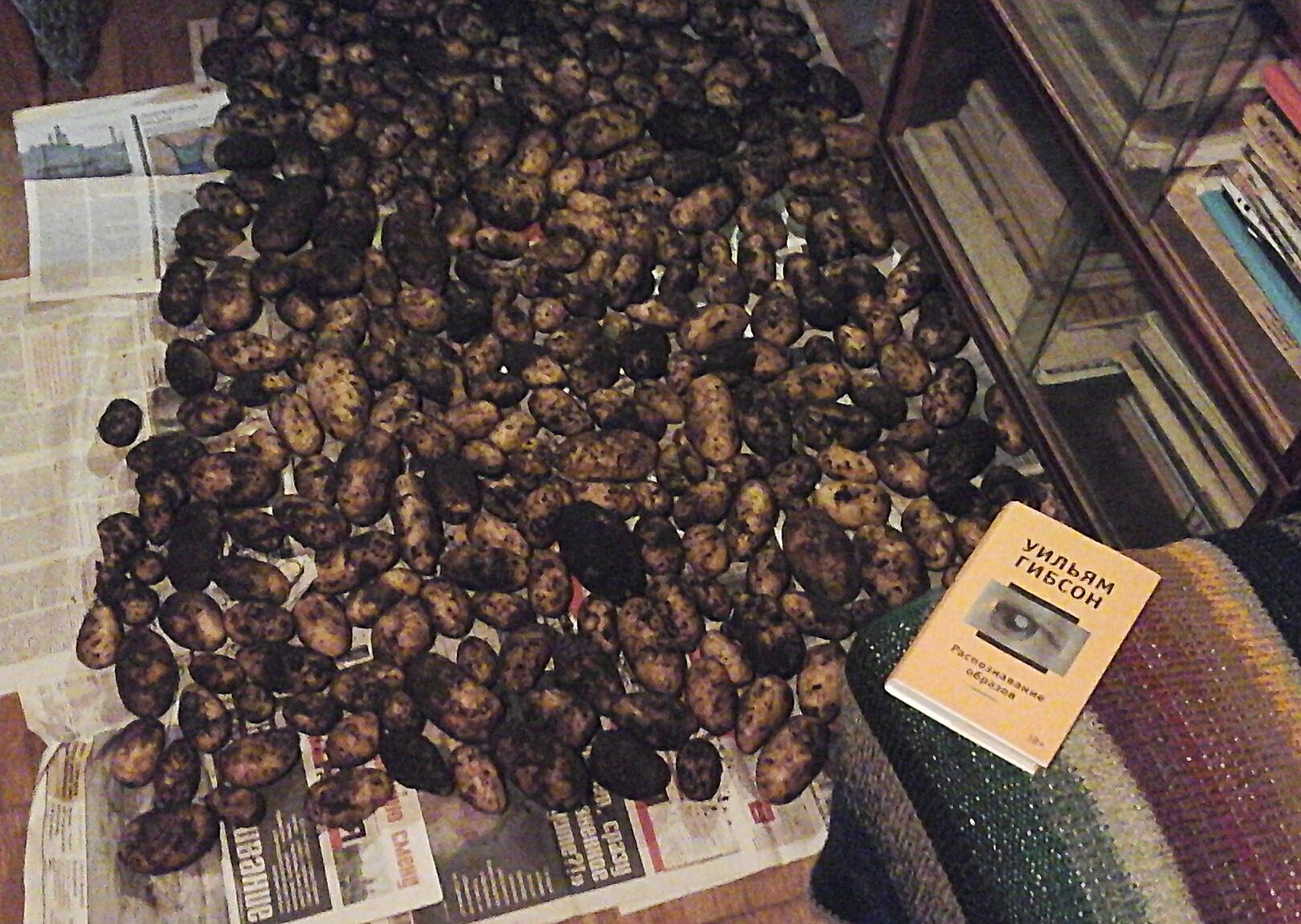 запасы картошки