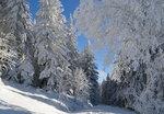Зима приукрасила